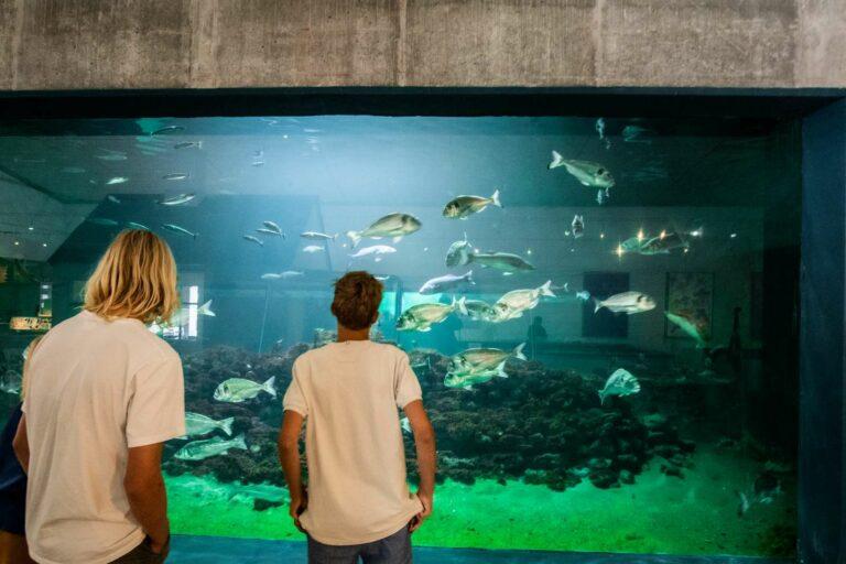 Akvariet2